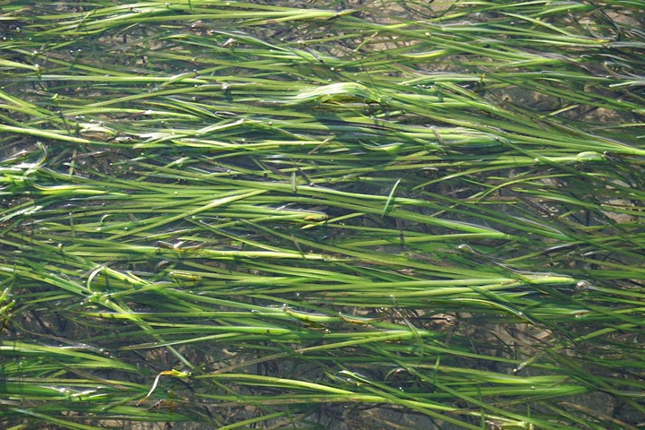 Protecting Our Seagrass Habitat- Free Participatory Public Art Installation image
