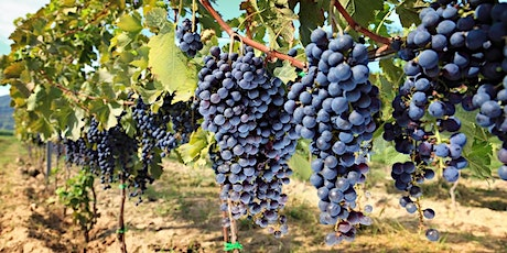 DC Aggies Winery Tour 2021 tickets
