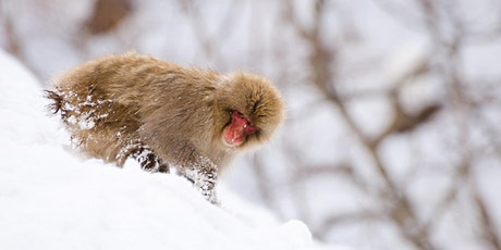 Tips & Tricks for Capturing Portfolio Worthy Wildlife Images - Online tickets