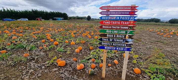 SECRET PUMPKIN - Pick Your Own Pumpkin in Moggerhanger, Bedfordshire image