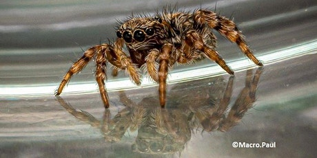 Spectacular Spiders - Family Activity Day tickets