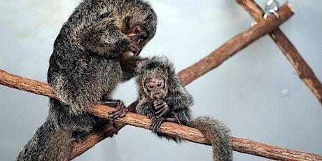 Prospect Park Zoo Photowalk with Sony & Focus Camera tickets