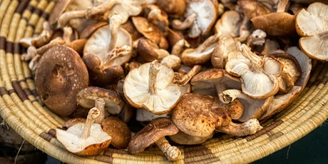 How to grow your own mushrooms tickets