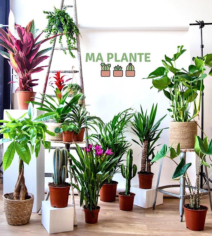 Image pour VENTE PLANTES BRUXELLES