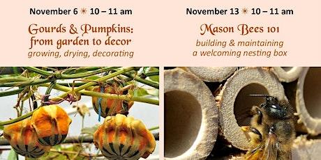Free Garden Workshops- Gourds & Pumpkins, from garden to decor tickets