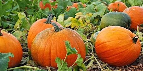 Spina Farms Pumpkin Patch tickets