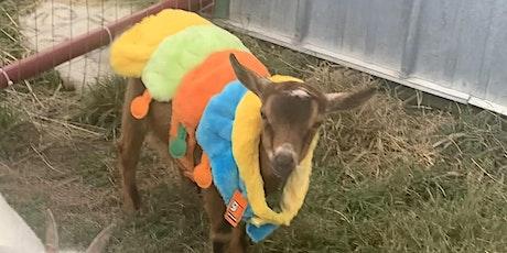 Goat Yoga at  Marine Heritage Park- Marine, IL tickets