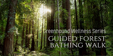 Meditative Forest Bathing Walk - Shinrin-Yoku on Parc Mont Royal billets