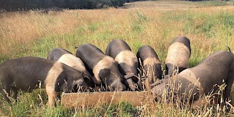 Pastured Pig webinar tickets
