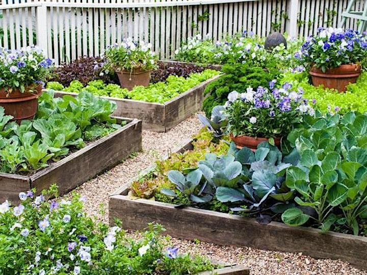 Go Grow Food ***! -  Contestant Registration image