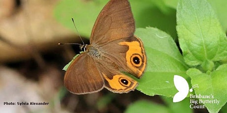 Brisbane's Butterflies Great and Small - Learning about their biology tickets