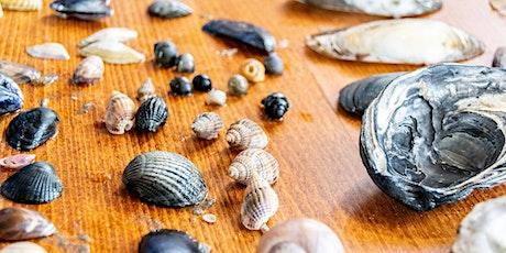 Strandspeurdag 2021 – ontdek de natuur van de Noordzee tickets