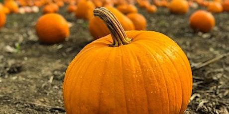 Pumpkin Patch Picking Tickets at Grindon Grange Farm tickets