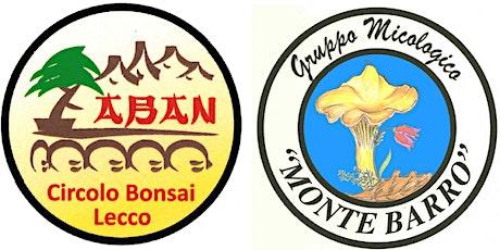 Funghi e Bonsai: meraviglie in giardino biglietti