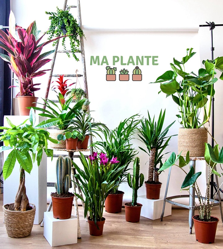 Image pour VENTE PLANTES NANTES