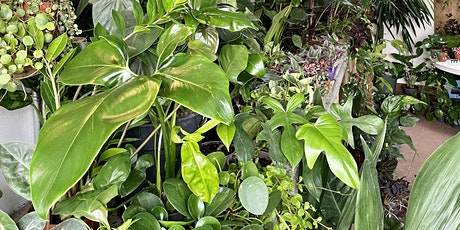 House plant care and maintenance with Charlotte Durrant at TOAST Cheltenham tickets