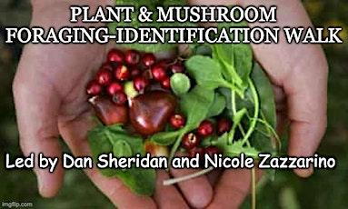 Plant & Mushroom Foraging-Identification Walk tickets