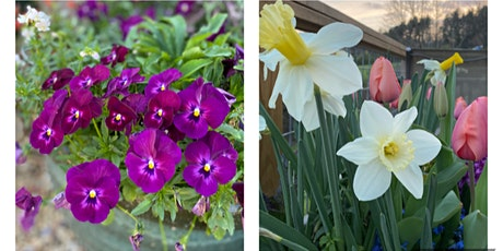 Fall to Spring Porch Pot Workshop tickets