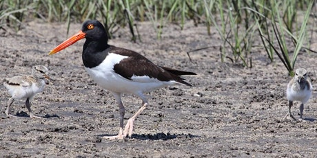 Weeding for the Oyster Catchers - Paddle/Trash/Plant Removal @  Bird Island tickets