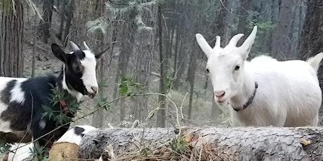Chicken Talk And Goat Walk tickets