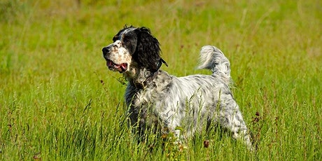 5 Things to Know about Working with Sporting Dog Breeds tickets