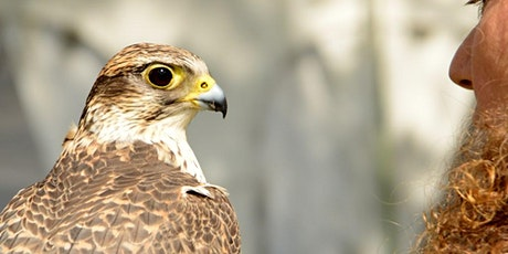 Animal Assisted Therapy Co-working with Birds of Prey Workshop tickets