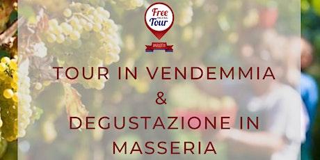 Tour in Vendemmia + Degustazione in Masseria biglietti