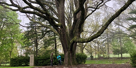 Discover the Moses Cleaveland Trees of Lake View Cemetery tickets