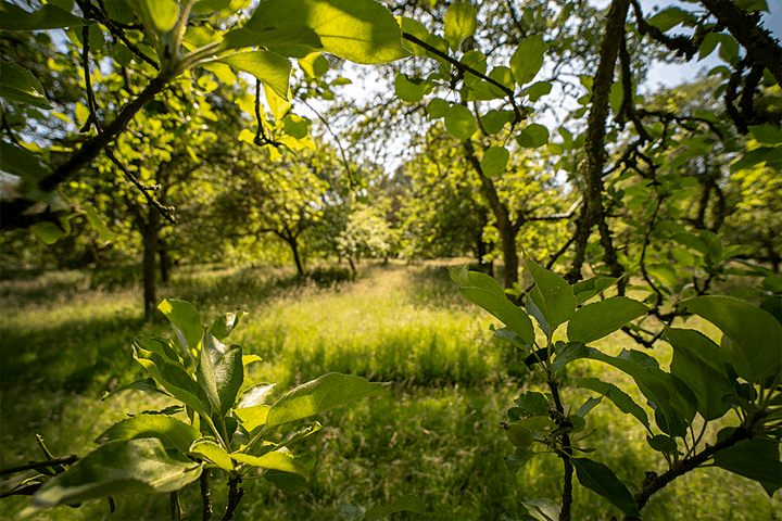 Orchard: A Year in England's Eden image