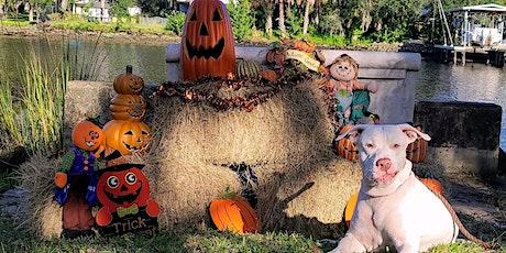 Seminole Heights Dog Pack Walk Halloween Costume Paw-ty tickets