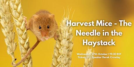 Harvest Mice - The Needle in the Haystack - Mammal Society Webinar Series tickets