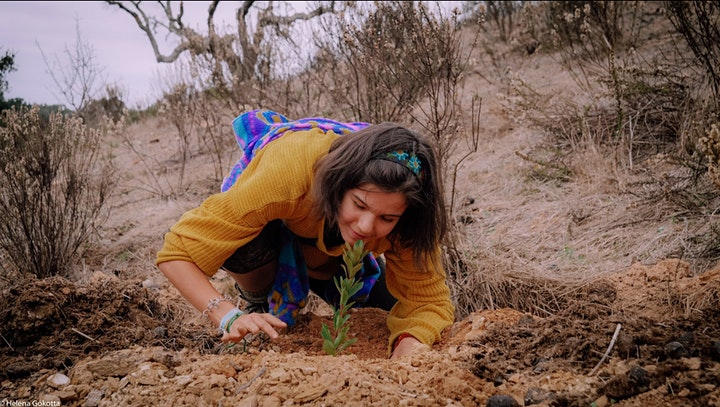 Primal Reforestation Gathering @ Traditional Dream Factory image