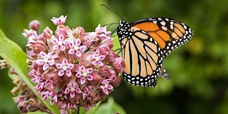 Native Milkweed for Monarch Butterflies: A Hands-On Workshop tickets