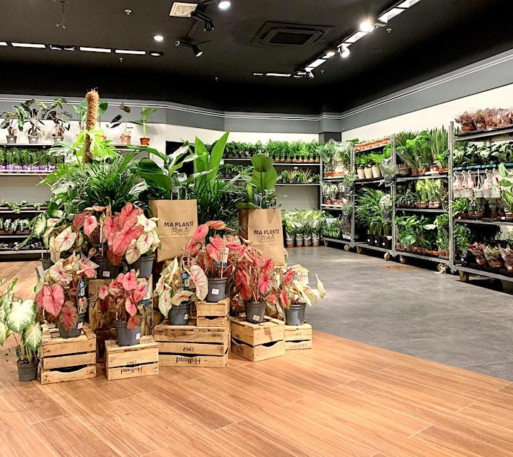 Image pour VENTE PLANTES LILLE