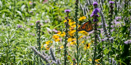 Tending the Earth: Gardens of Resilience tickets