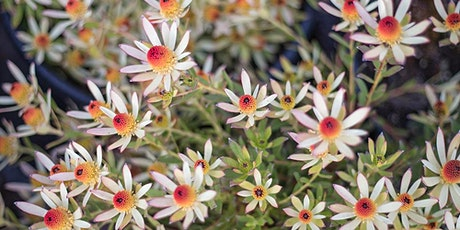 LIVE STREAM: Fall is for Planting • Our Favorite Plant of the Week tickets