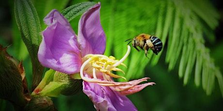 Australian Pollinator Week Walk tickets