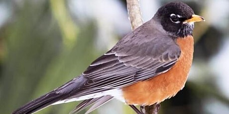 Beginner Birders Field Trip tickets