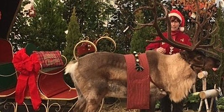 Meet Aspen the Reindeer - presented by Friends of East Goshen tickets