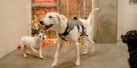 Pupsgiving Play Dates - Mission Bay tickets