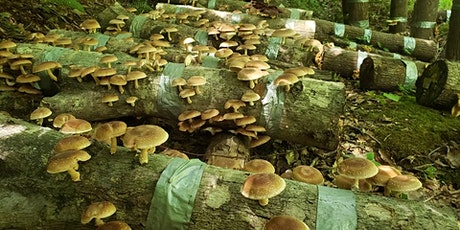 Grow Your Own Mushrooms! tickets