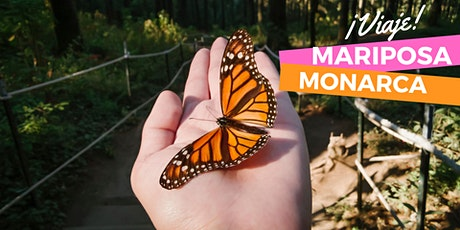 Mariposa Monarca boletos