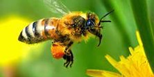 Starting in Balanced Bee Keeping at Brinscall Hall