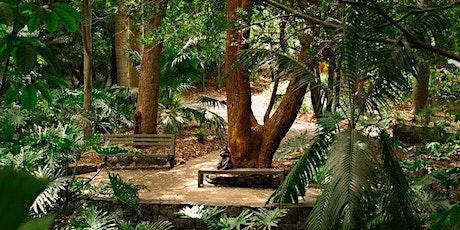Forest Bathing in Brisbane: Mt Coot-Tha Botanic Gardens tickets
