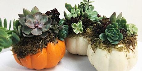 Fall Pumpkin Succulent Workshop tickets