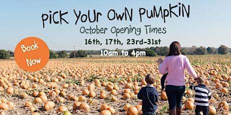 Pick Your Own Pumpkin,  Nr Ashford, Kent tickets
