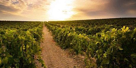 Cata de Vinos Mediterráneos con picoteo en Sifón - Vol.2 tickets