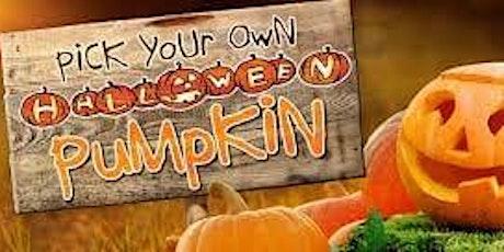 Gorgie City Farm Pumpkin Pick tickets