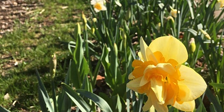Park Stewardship: Autumnal Daffodil Bulb Planting in Fidler-Wyckoff Park tickets