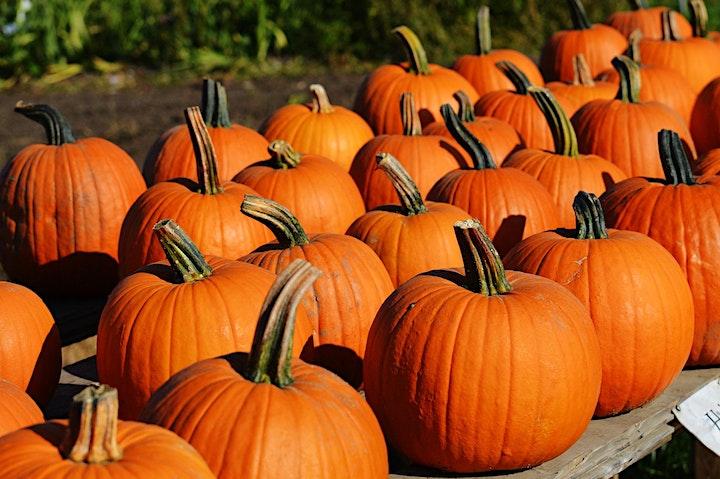 Come Carve Pumpkins With Us at Matsuda Farm! image